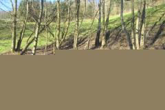 Amphibienteich Killwangen